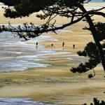 Schönstes Naturgebiet der Niederlande: Das Wattenmeer