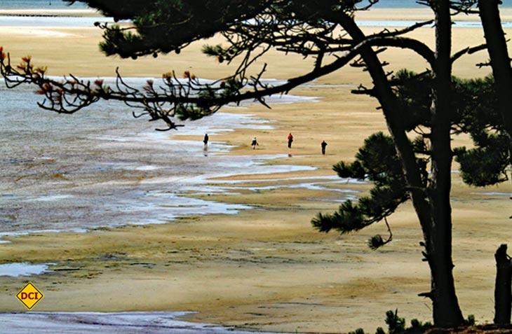 Das Holländische Wattenmeer ist mit Abstand das beliebteste Naturgebiet in den Niederlanden. (Foto: Holland.com)