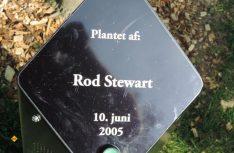 Im Stadtpark von Aalborg verewigt – auch Rod Steward ist in der Stadt aufgetreten und hat einen Baum gepflanzt. (Foto: hcb)