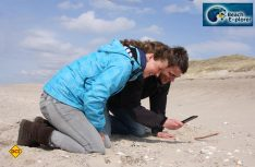 Strandgut per App bestimmen: Mit der App von BeachExplorer lassen sich Strandfunde an der Nordseeküste bestimmen. (Foto: BeachExplorer) Thiemann)