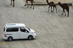 Indianer und Kamele: Der Stadtindianer auf großer Fahrt Richtung Mongolei und Kirgistan. (Foto: Zoom)