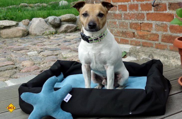 Ein perfektes Hundekörbchen für unterwegs bietet handemade for dogs mit dem Home to Go-Reise-Hundebett an: (Foto: handmade for dogs)