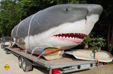 Per Tieflader und bestens gesichert kommt der größte Hai der Erdgeschichte in den berühmten Dino-Park an der luxemburgischen Grenze. (Foto: Felsenland Südeifel Tourismus GmbH)