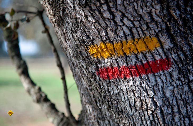 Markante Wandermarkierung an Korkeichen weisen den Weg für den TransAlentejo-Trail in Portugal (Foto: TransAlentejo)