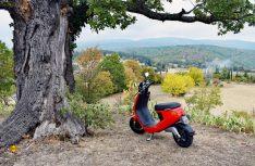Nur mit Zikaden und einem schwarzen Eichhörnchen auf der Steineiche musste sich der rote NIU seinen Parkplatz mit toller Aussicht teilen. (Foto: hcb)