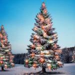 Weihnachten und keine Peilung? Elf schnelle Camper-Präsente für das Fest