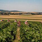 Per Rad durch die Weinberge der Champagne