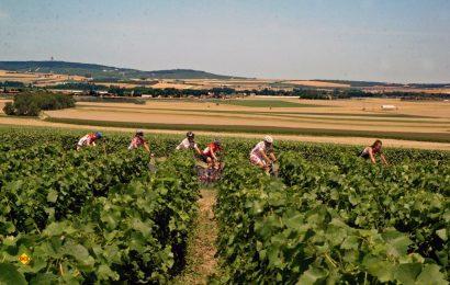 Auf zwei Rädern durch das Paradies für Wein- und Champagnerliebhaber. (Foto: Champagne CCVMR)
