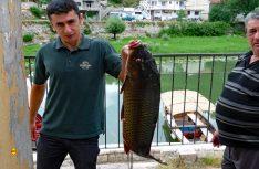 Fangfrischer Fisch aus dem Skadar-See. (Foto: det)
