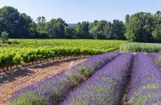 Bis zu den Hochplateaus der Provence führt die beliebte RN 7. (Foto: Cotes du Rhone)