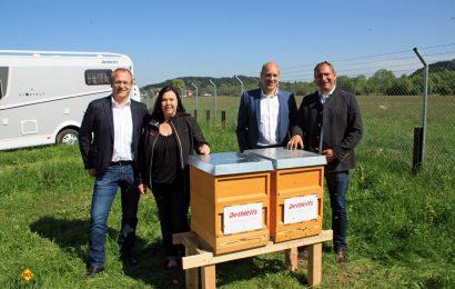 60.000 neue Mitarbeiterinnen von Dethleffs sind in zwei am Werk aufgestellten Bienenkörben an der Arbeit. (Foto: Dethleffs)