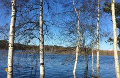 Menschenleere Einseimkait am norwegischen Fluss Glomma. (Foto: McRent)