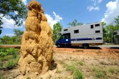 Termitenhügel wird man überall im Topend – dem nördlichen Teil Australiens, finden. (Foto: Abert; abenteuerosten.de)