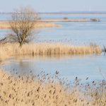 "Niederlande bekommt neuen Nationalpark ""Nieuw Land"""