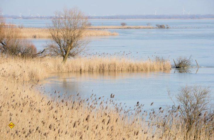 """Der neue niederländische Naturpark """"Nieuw Land"""" ist auf ehemaligem Poldergebiet entstanden. (Foto: Flevo Tourismus)"""