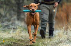 Das Wurfspielzeug muss mit und verschaftt Herrchen und Hund viel