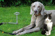 An der Langen Leine: Ein Erdbodenanker lässt dem Hunde viel Bewegungsfreiheit und sichert ihn auf dem Campingplatz. (Foto: Movera)