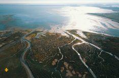 Zur Tierbeobachtung mit Fähren in den Naturpark NL-Delta. (Foto: NBTC)