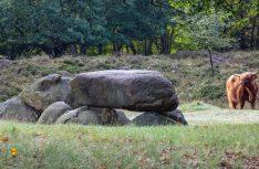 Im Hunebed-Zentrum in Borger können sich Besucher über die Jahrtausende alten Grabesstätten informieren und zahlreiche Artefakte begutachten. (Foto: NBTC)