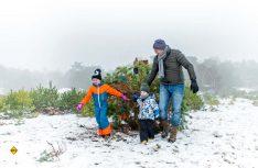 Weihnachtsbaum schlagen im Nationalpark. (Foto: NBTC)