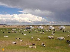 Nomaden in der asiatischen Steppe. Schafe sichern das Überleben der Menschen. (Foto: Abert/abenteuerosten.de)