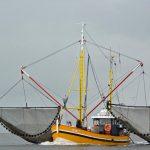 Wattenmeer Nationalpark-Partner – Botschafter für den Nationalpark Wattenmeer