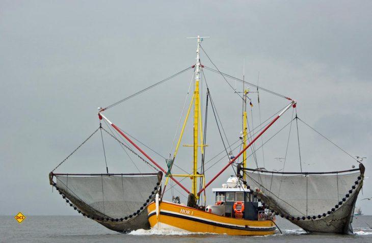 Das Partnerschaftsprogramm des Nationalparks Schleswig-Holsteinisches Wattenmeer wird von Städte, Gemeinden, Hotels oder Campingplätze, Direktvermarkter, Museen, Reedereien, WattführerInnen und KünstlerInnen unterstützt, um die Natur dieser einzigartigen Landschaft zu schützen und zugleich für Gäste erlebbar zu machen. (Foto: Nationalpark Partner SH