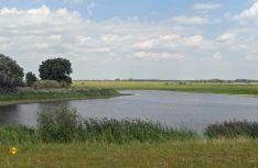 Das Grüne Band hier im Grenzstreifen mit dem Biospärenreservat am Stresower See. (Foto: det / D.C.I.)