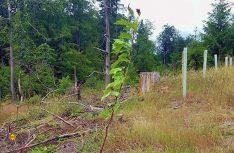 Die erste Pflanzungen des Vereins Wohnmobil für Klimaschutz im hessischen Weztzlar. (Foto: WOHNmobil Klimaschutz)