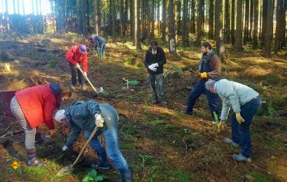 Tolle Aktion mit Vorbildcharakter: Mitglieder von Wohnmobil für Klimaschutz pflanzen eigenhändig 200 Douglasien im Harz. (Foto: Wohnmobil für Klimaschutz)