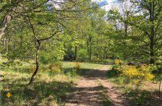 Wunderschöne Heidelandschaft in der Nähe von Dallgow-Döberitz, Brandenburg. (Foto: AllTrails.com)
