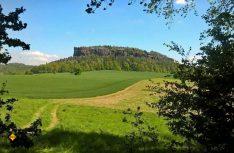 Der markante Tafelberg Quirl in der Sächsischen Schweiz bei Königstein. (Foto: AllTrails.com)