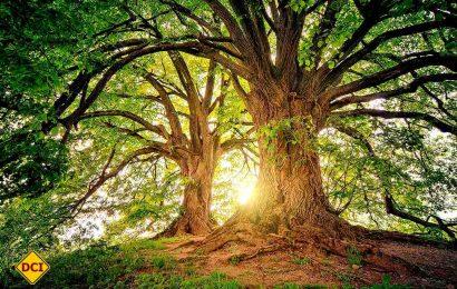 Caravaning und Natur passen gut zusammen. Das D.C.I. stellt Baumpflanzaktionen vor. (Foto: pixabay; jplenio)