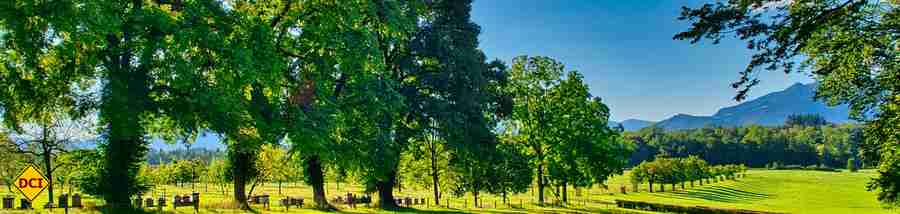 Baumpflanz-Aktionen sind schnell, direkt und mit wenigen Klicks möglich. (Foto: Antranias; pixabay.com)