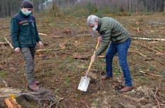 Albert Märkl, Vorstand vom Verein Wohnmobile für Klimaschutz setzt symbolisch eine erste Steineiche im Kottenforst. (Foto: det / D.C.I)