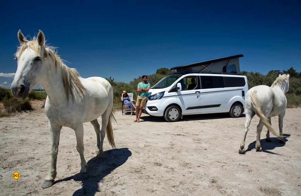 Die neue Trigano-Serie Panama basiert auf dem Ford Transit Custom und kommt in zwei Fahrzeuglängen. (Foto: Trigano)